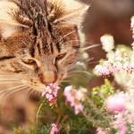 Jaro s kočkou