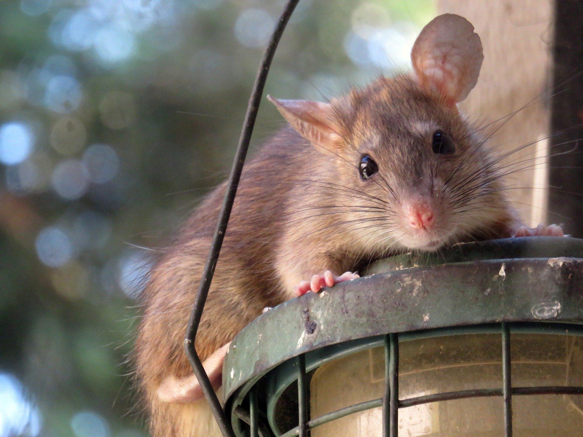 Seminář Rok Kovové krysy